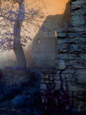 Image: Tree in Castle Ruins