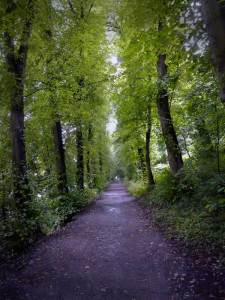 Image: Dark Forest Road