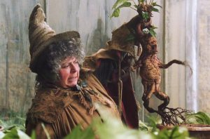 Image: Mandrake from Harry Potter