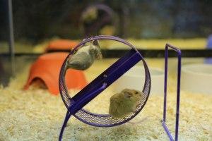 Image: Polar Opposite Mice
