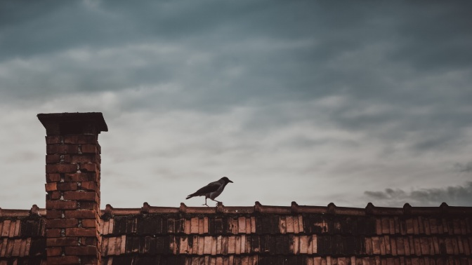 Image: Crow on Rooftop