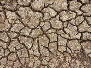 Image: Dried Earth